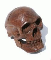 頭蓋骨10センチメートル