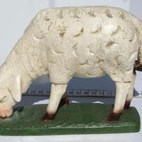 Vita får