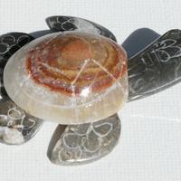 Marmol tortue de pierre
