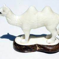 Big chameau de noix de tagua