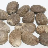 Tuercas de tagua